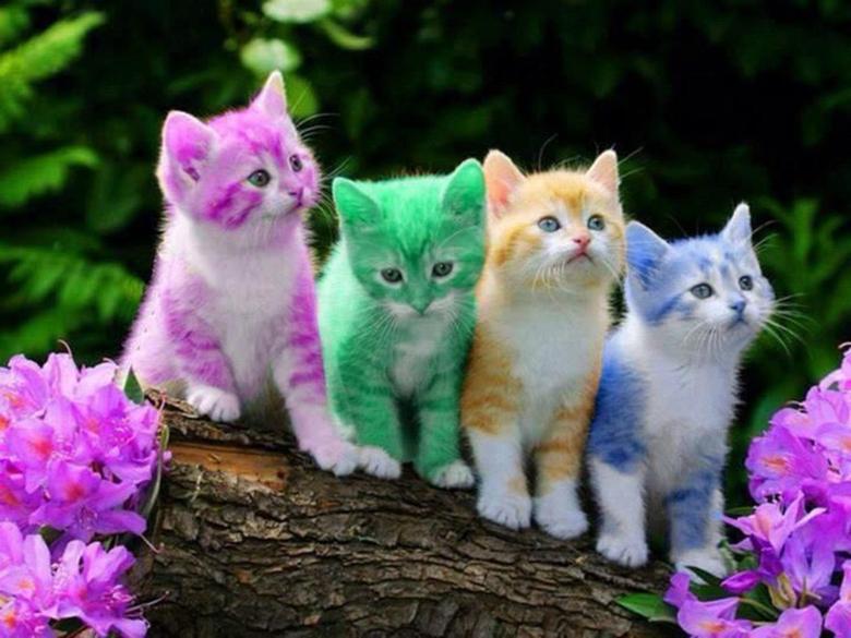 Cats Wallpapers Rainbow KIttens