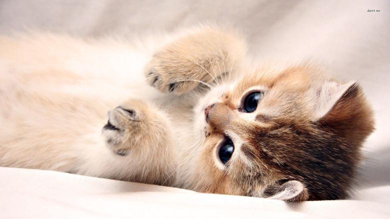 Best 40 Kitten Backgrounds on HipWallpapers