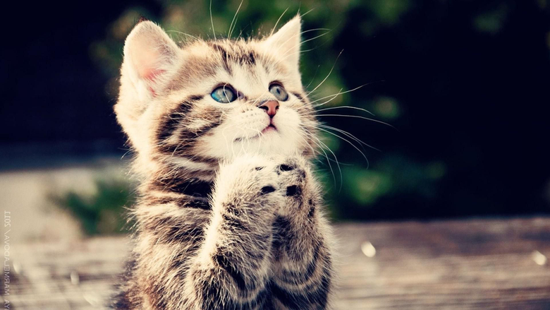 Cute Cats and Kittens Wallpapers New Tab