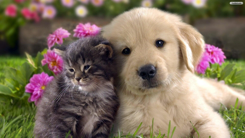 Cute Cats and Dogs Wallpapers
