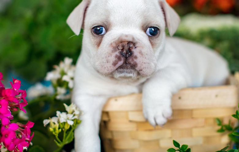 Baby Bulldogs Wallpapers Stock Wallpapers on ecopetit cat