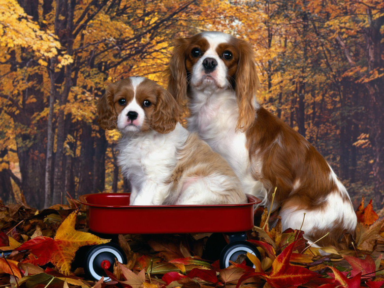 Cute dogs Wallpapers Image Album