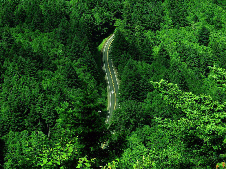 Wallpapers For Green Forest Wallpapers