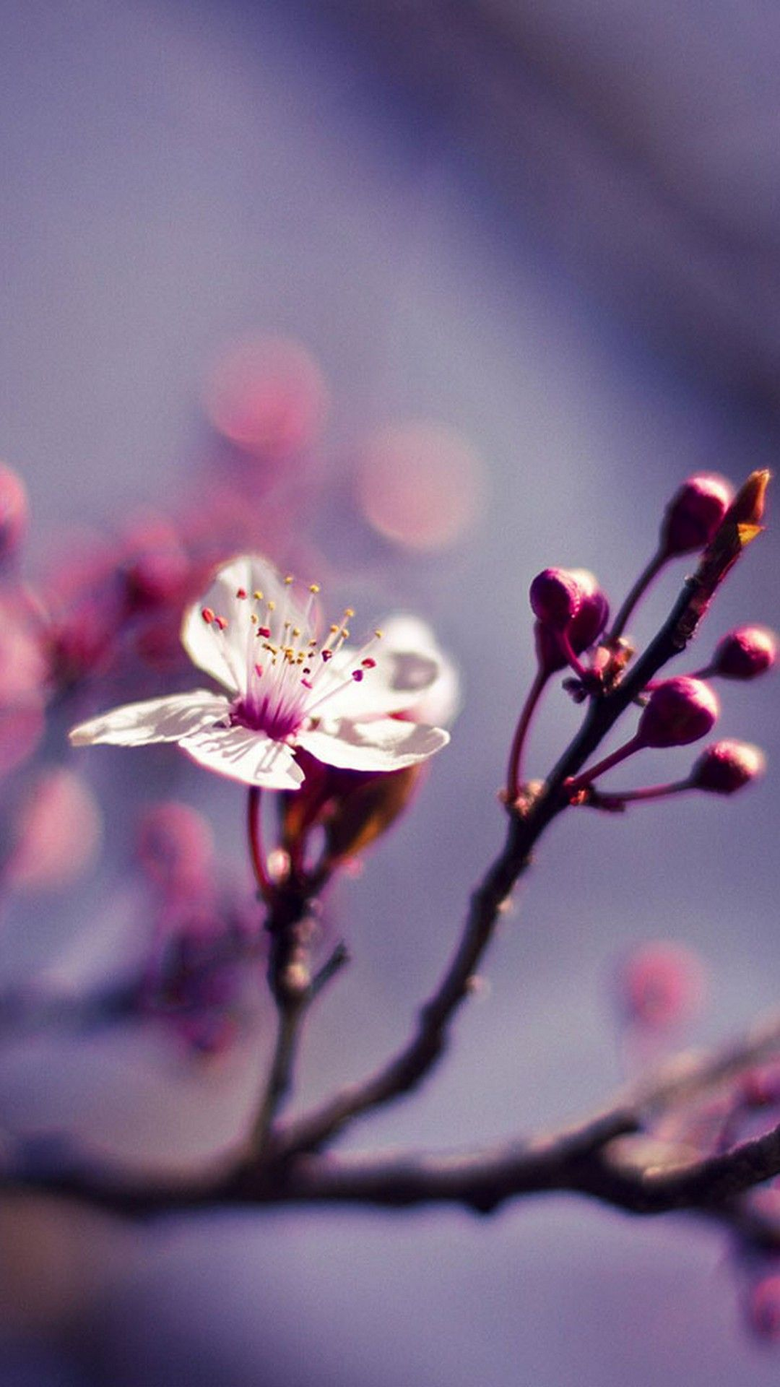 Cute Spring iPhone X Wallpapers HD