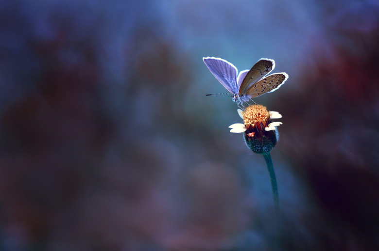 Wallpapers Butterfly Yellow flower Macro HD Photography
