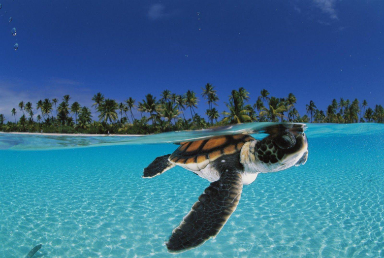 Sea Turtle Desktop Wallpapers