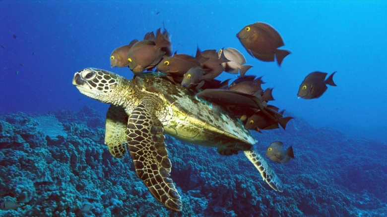 Wallpapers Turtles