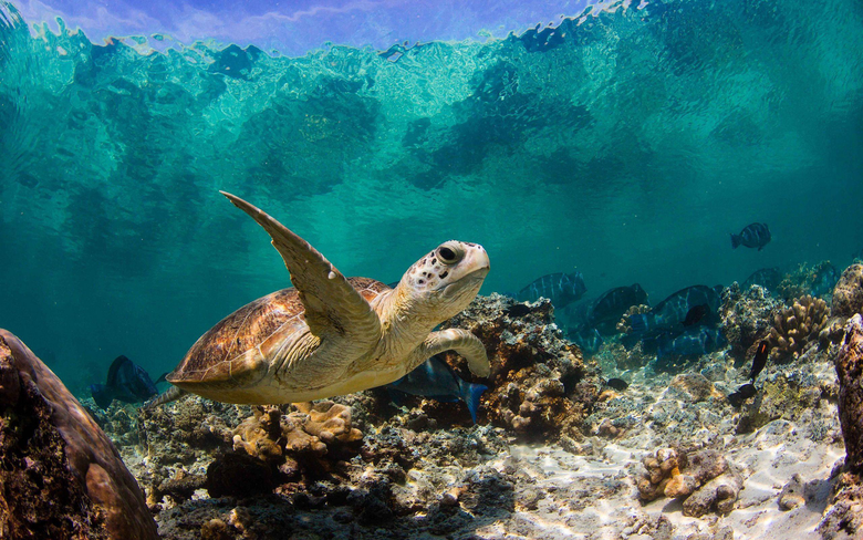 Turtle Wallpapers Group