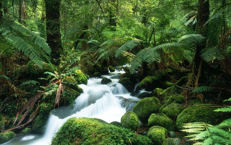 Cement Creek Yarra Ranges National Park Victoria
