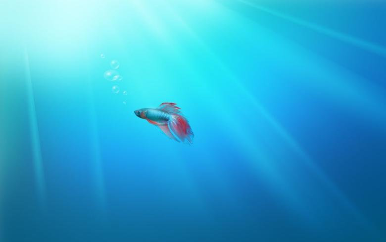 Beautiful Windows Sample Fish