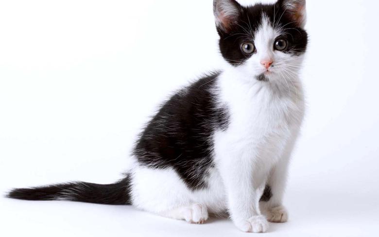 Black White Cat Kitten Wallpapers HD Desktop and Mobile Backgrounds