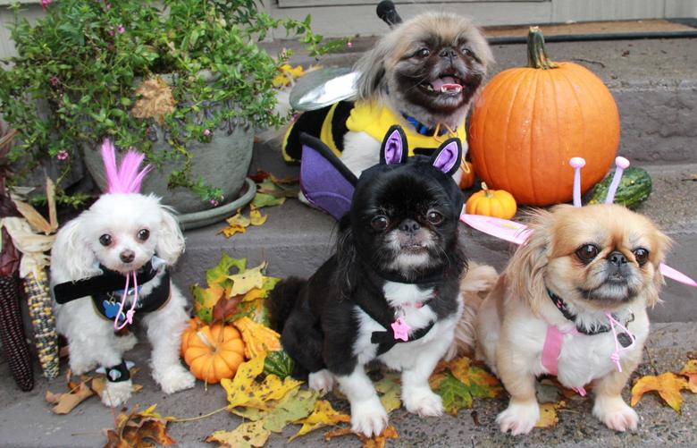 Halloween Pets Wallpapers