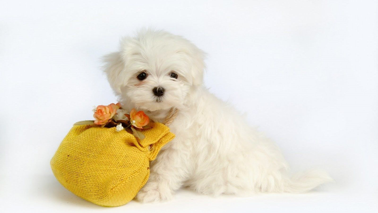 Cute Puppies Wallpapers For Halloween Hd Funny Puppy Backgrounds Desktop Backgrounds