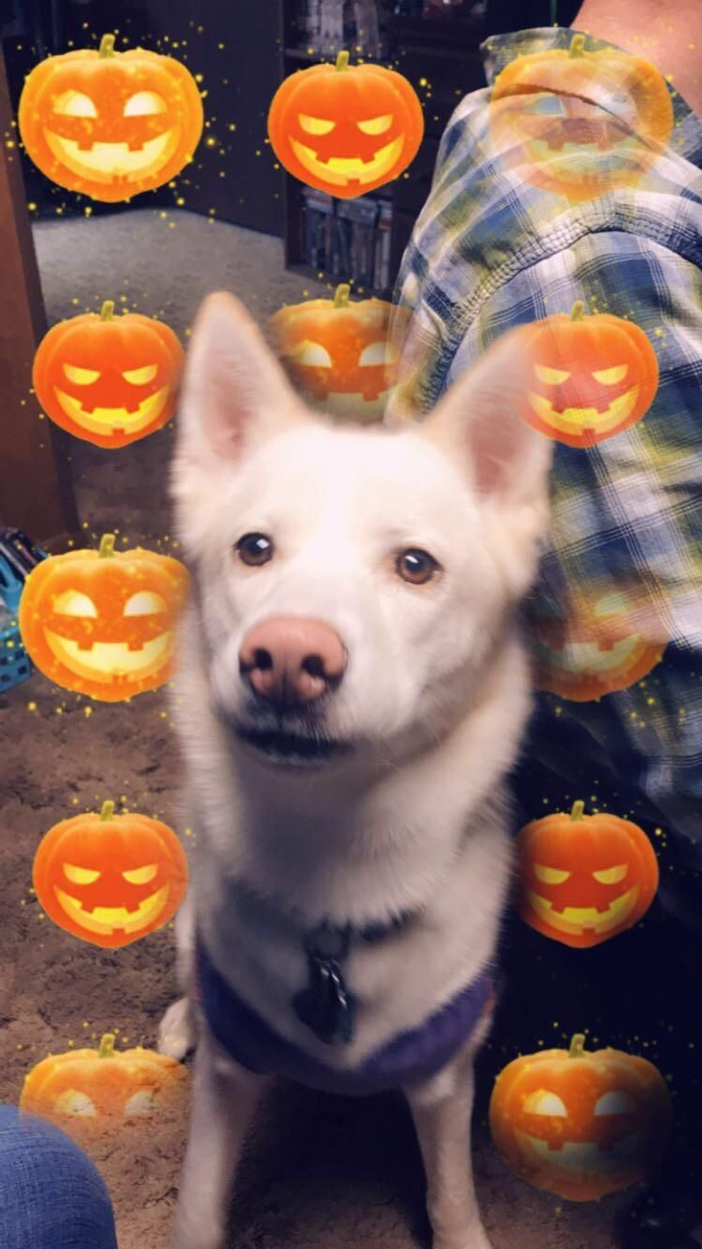 My Luna is ready for Halloween