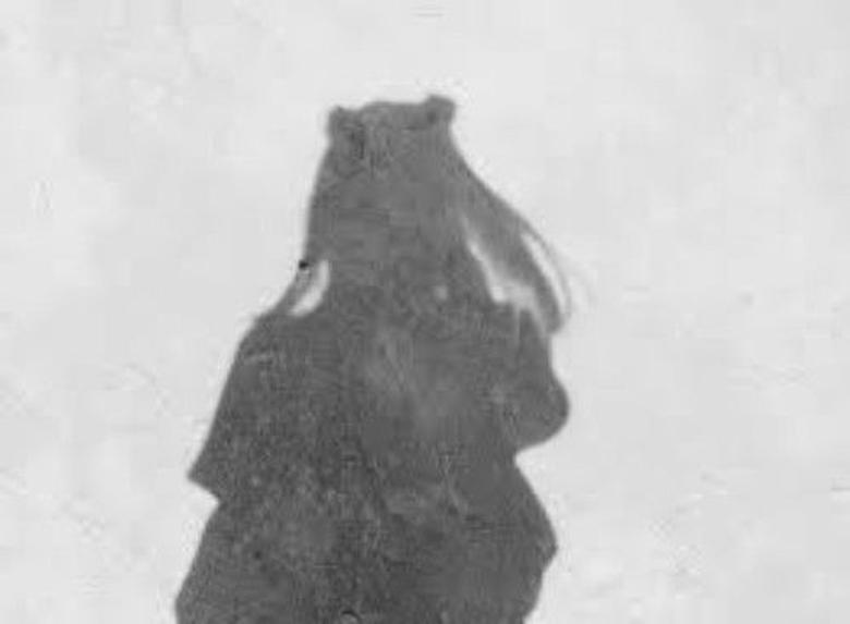 Cyan Shadow