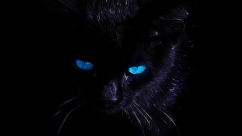 Black Cat Wallpapers HD blue eyes awesome Wallpapers