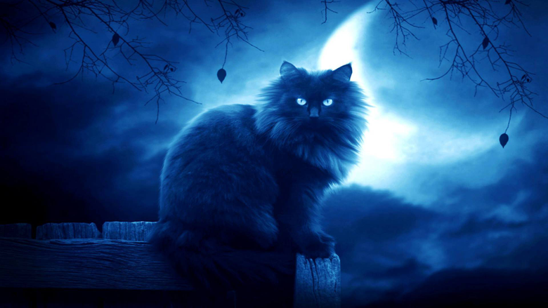 Cat Backgrounds Wallpapers Image