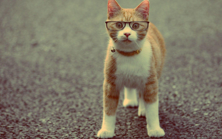 Funny Cat Wallpapers Collection