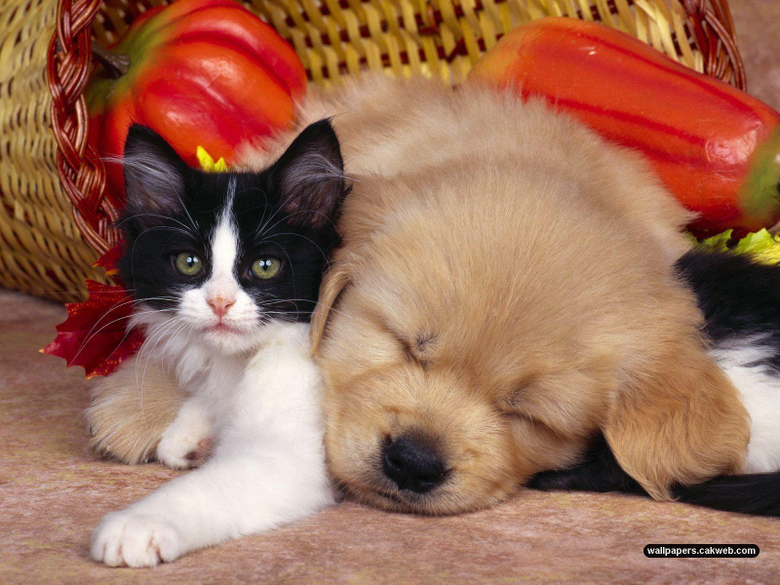 Astounding funny cats and dogs pictures together together with