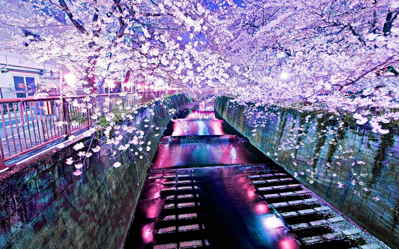 Korea Spring Wallpapers