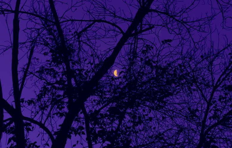 Wallpapers moon sky trees nature night leaves purple 4k ultra hd backgrounds image for desktop section