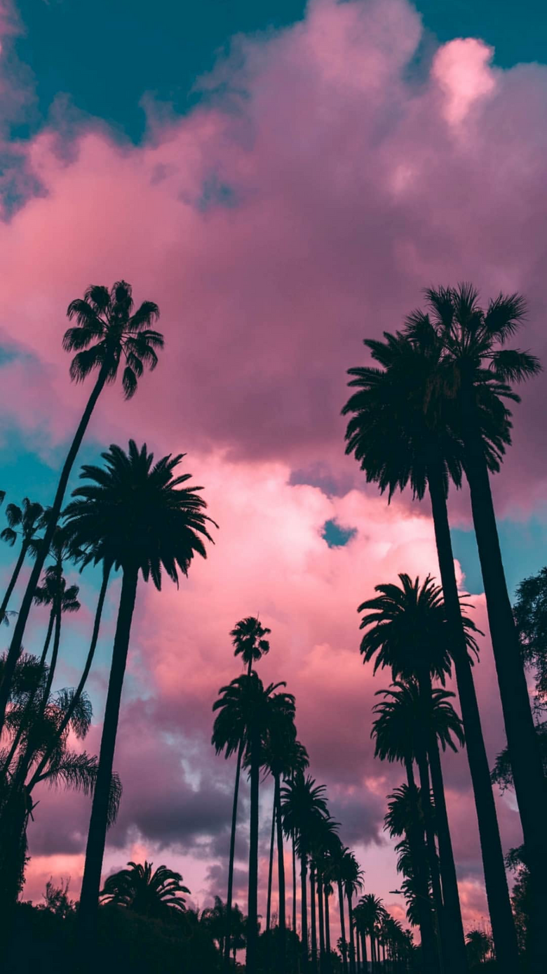 Palm Tree Sunset Wallpapers