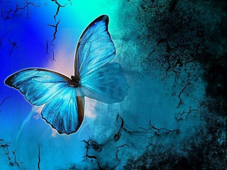 Blue Butterfly Wallpapers 1024x768 for your Desktop Mobile Tablet