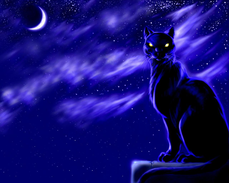Black cat moon at night wallpapers and image
