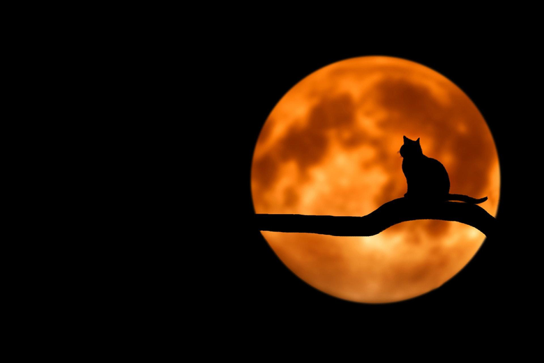 Photography of Cat at Full Moon Stock Photo
