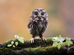 tag funny owl wallpapers wallpapersafari