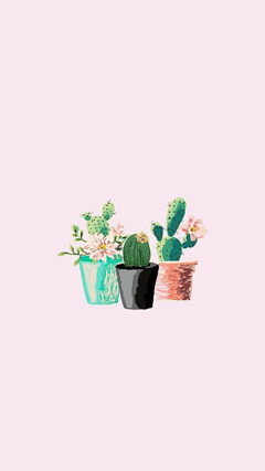 Aesthetic Cactus Wallpapers posted by John Anderson