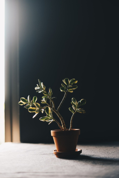 House Plant Pictures HD unsplash