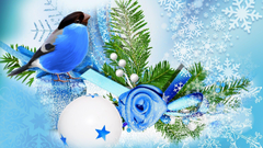 Blue bird winter season wallpapers