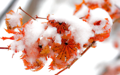 Nice Snow on Leaves in Winter Season Wallpapers