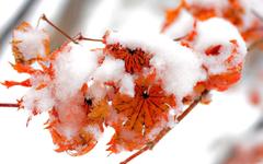 Nice Snow on Leaves in Winter Season Wallpapers