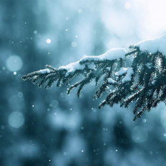 Winter Season Snow Trees Lens Flare iPad Air Wallpapers
