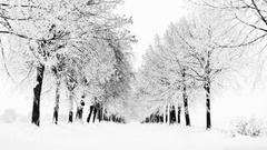 Winter Season Ultra HD Desktop Backgrounds Wallpapers for Multi Display Dual Monitor Tablet Smartphone