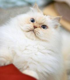 Fluffy The Cat Worksheet