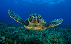 Pix For Cute Turtle Wallpapers Hd