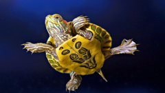 Turtle Wallpapers 4660 1920x1080 px HDWallSource