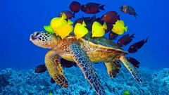 Wallpapers For Baby Sea Turtle Wallpapers
