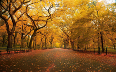 United States New York New York City Central Park in the Fall