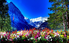 Amusement Parks BANFF NATIONAL PARK CANADA Flowers Mountains Full
