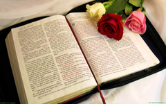 Roses on the Bible wallpapers