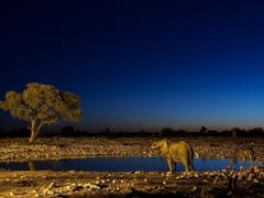 Sahara Night Light Wallpapers