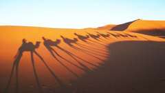 Camels Shadow in Sahara Desert Wallpapers