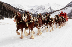 World renowned Budweiser Clydesdales to appear at museum National