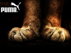 Fantastic Puma Wallpapers For Iphone