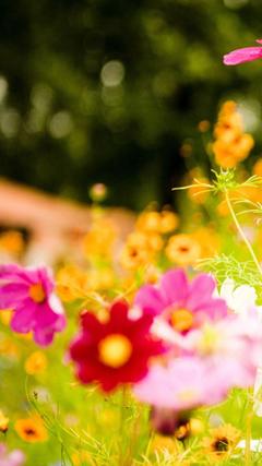 Vivid Flowers 3 Samsung Galaxy S4