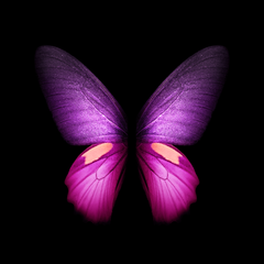 You can the Live Wallpapers from the Galaxy Fold right here